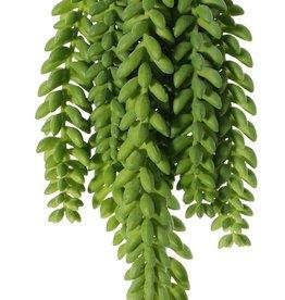 Sedum Morganianum, 9 strengen; 2 groot 25cm, 4 medium 18cm, 3 klein 15cm, 846 plastic bonen, 31cm