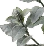 Eselsohr, Woll-Ziest, blühend - stachys byzantina, flocked, 106cm