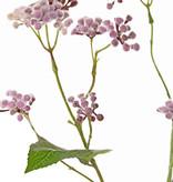 Eupatorium (Leverkruid), 3 vertakkingen, 34 clusters bloemen, 5 blad, 80 cm