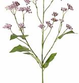Eupatorium, 34 flores, 5 hojas, 80 cm