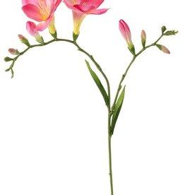 Freesia 'Beau', 2 grote bloemen (7 x 6 cm), 6 knop & 2 blad, 65cm
