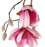 Magnolia maxi, 7 flowers, 5 big & 15 small buds, 115 cm