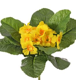 Primula, Primeln, 12 Blüten, 9 Blätter, Ø 20 cm, Höhe: 20 cm