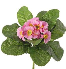 Primula, 12 flowers, 9 leaves, Ø 20 cm, h.: 20 cm