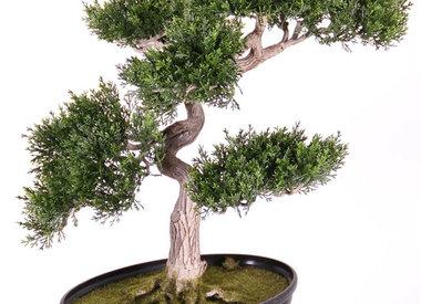 Kunst Bonsai