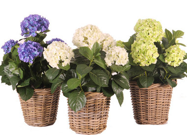 Plantas artificiales floreciendo