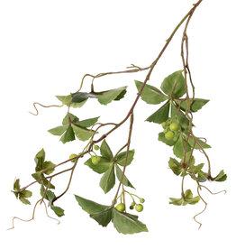 Wingerd (vijfbladige) (Parthenocissus) x3, 12 blad & 3 bessentoeven, 9 klimmers, 80cm