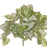 Lamium maculatum, spotted dead-nettle ( 'Beacon Silver') 35 leaves, Ø 34 cm, H. 25 cm