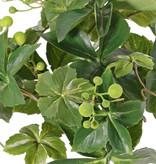 Wingerdbush (vijfbladige) (Parthenocissus) x9, 30 blad & 6 bessentoef, Ø 35 cm