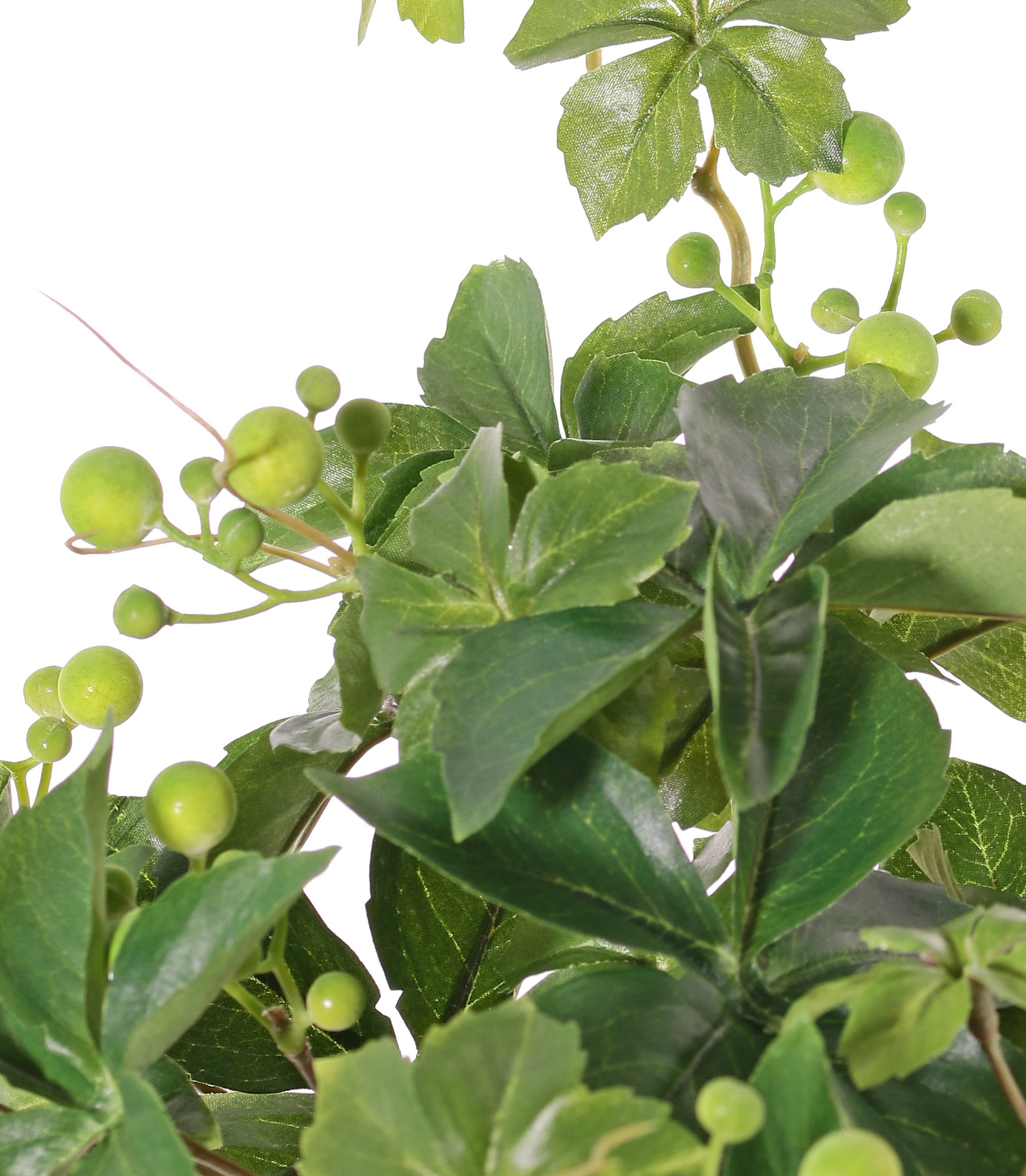 Jungfernrebenbusch, Wilder Wein, Zaunreben (Parthenocissus), ) 9 Verzweigungen, 30 Blätter & 6 Beerenbündel, Ø 35 cm