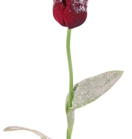 Tulip 2lvs, iced, 65cm