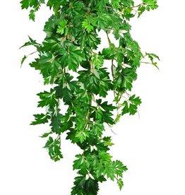Cissus rhombifolia planta, 387 hojas, resistente de rayos UV, 110 cm