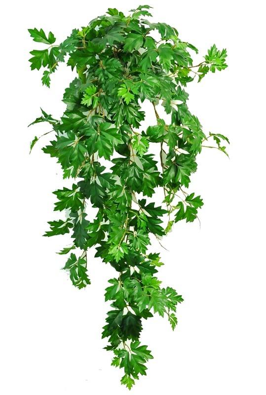Cissus rhombifolia (Koningswingerd) hangplant, met 387 blad, UV bestendig, 110 cm