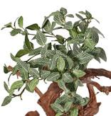 Fittonia, 120 hojas, resistente del fuego, 33 cm