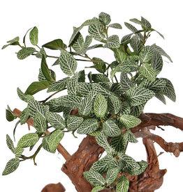 Fittoniabush (Mozaiekplant), 9 vertakkingen, 120 bladeren, brandvertragend, 33 cm