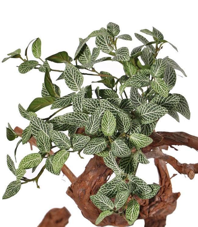 Fittonien (Fittonia), Silbernetzblätter, 9 Verzweigungen, 120 Blätter, schwer entflammbar, 33 cm