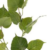 Ficus religiosa (Bodhiboom) 3 vertakkingen, met 15 blad & 10 plastic besjes, 78 cm