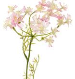 Daucus carota (Wilde peen) x4, 4 schermbloemen (49 bloemetjes) & 6 bladtoeven, 85 cm