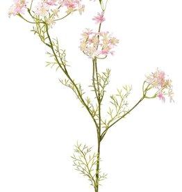 Daucus carota (Zanahoria silvestre) 4 ramas, 4 umbelas (49 flores) y 6 hojas, 85 cm