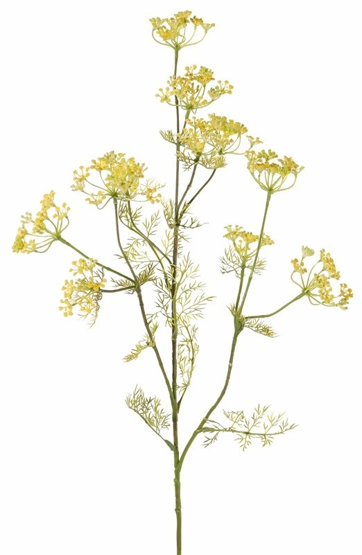 Dille (Anethum) spray, 11 clusters of flowers, 13 sets of leaves, (wired top) 78 cm