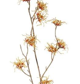 Hamamelis mollis, Zaubernuß, 3 Verzweigungen, 10 Blumen, (Ø 5 cm), 68cm