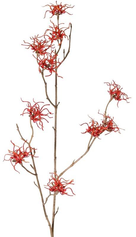 Toverhazelaar (Hamamelis mollis) 3 vertakkingen, met 10 bloemen (Ø 5 cm), 68cm