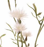 Flockenblumen (Centaurea) 7 Verzweigungen, 15 Blüten, 17 Knospen, 10 Blätter, beflockt, 80 cm