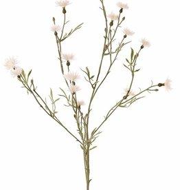 Centaurea, 15 flores, 17 capullos, 10 hojas, 80 cm