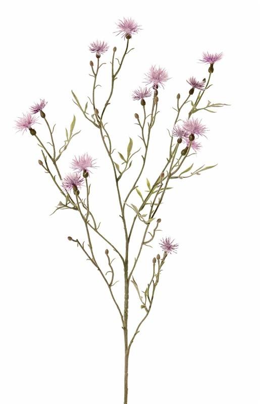 Loggerheads, basketflowers, centory, startthistles, (Centaurea), 15 flowers, 17 buds, 10 leaves, flocked, 80 cm