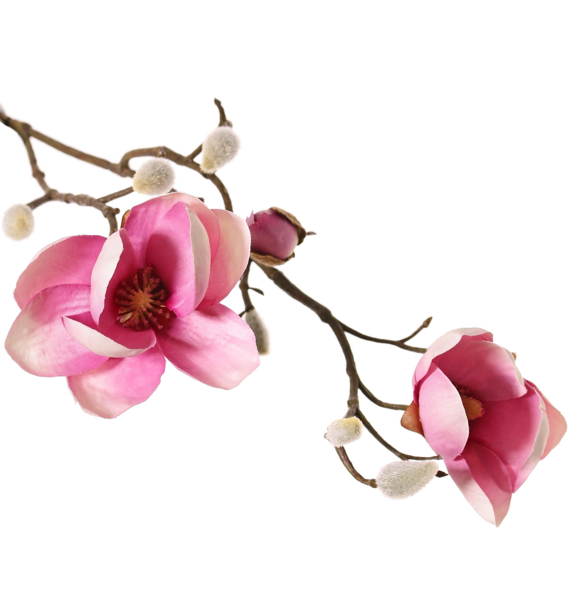 Magnolien-Zweig mit 3 Verzweigungen, 2 Blumen, (Ø 8 & 5 cm), 8 Knospen, 53 cm