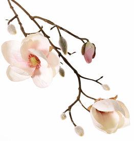 Magnolia (Beverboom) x3, 2 bloemen (Ø 8 & 5 cm), 8 knoppen (behaard), 53 cm