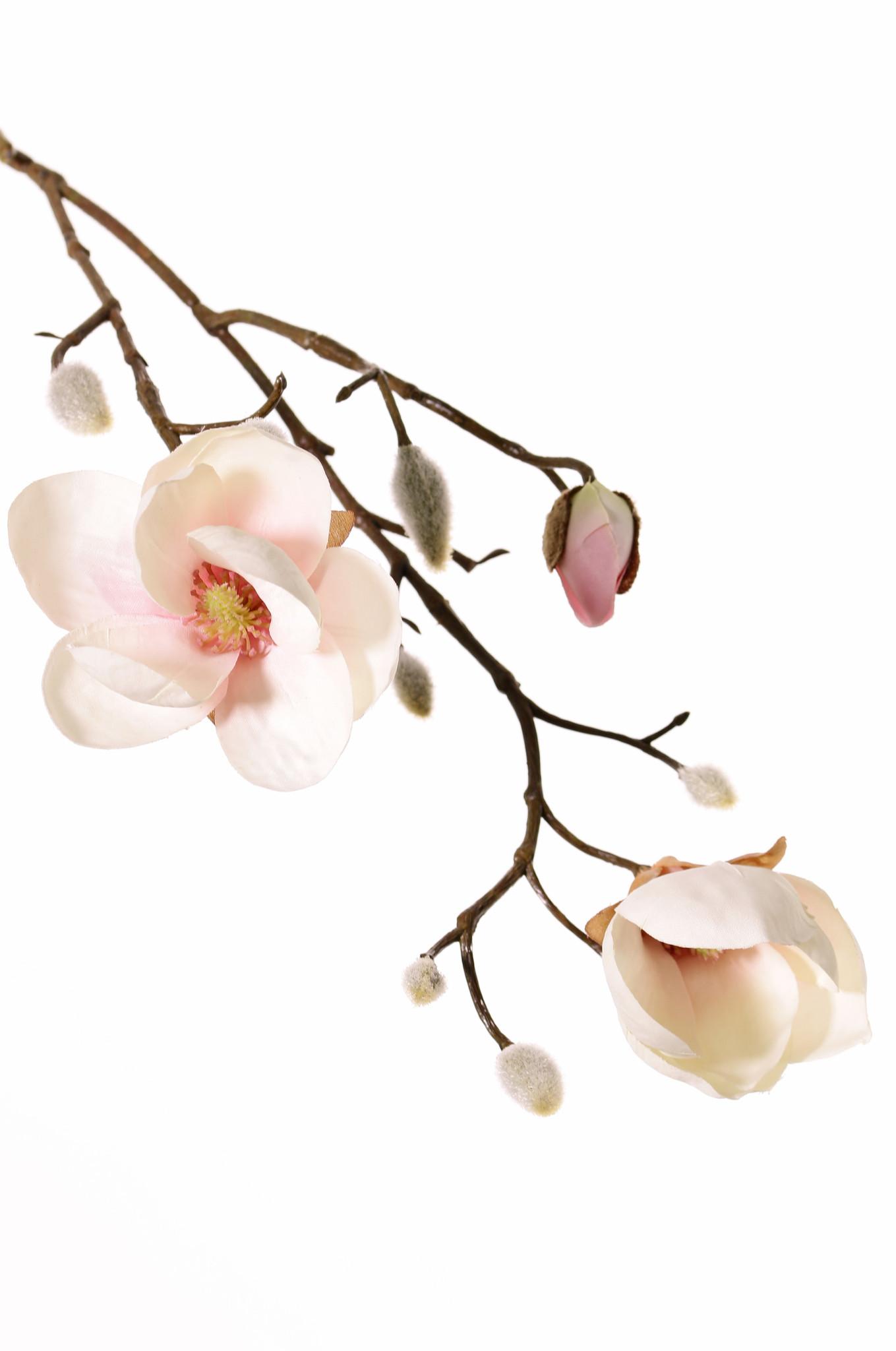 Magnolia, 2 flowers, (Ø 8 & 5 cm), 8 buds, 53 cm