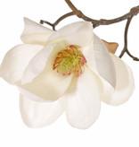 Magnolia (Beverboom) 4 vertakkingen, 5 bloemen (3x Ø 8cm, 2x 5 cm) & 12 knoppen (behaard), 80 cm