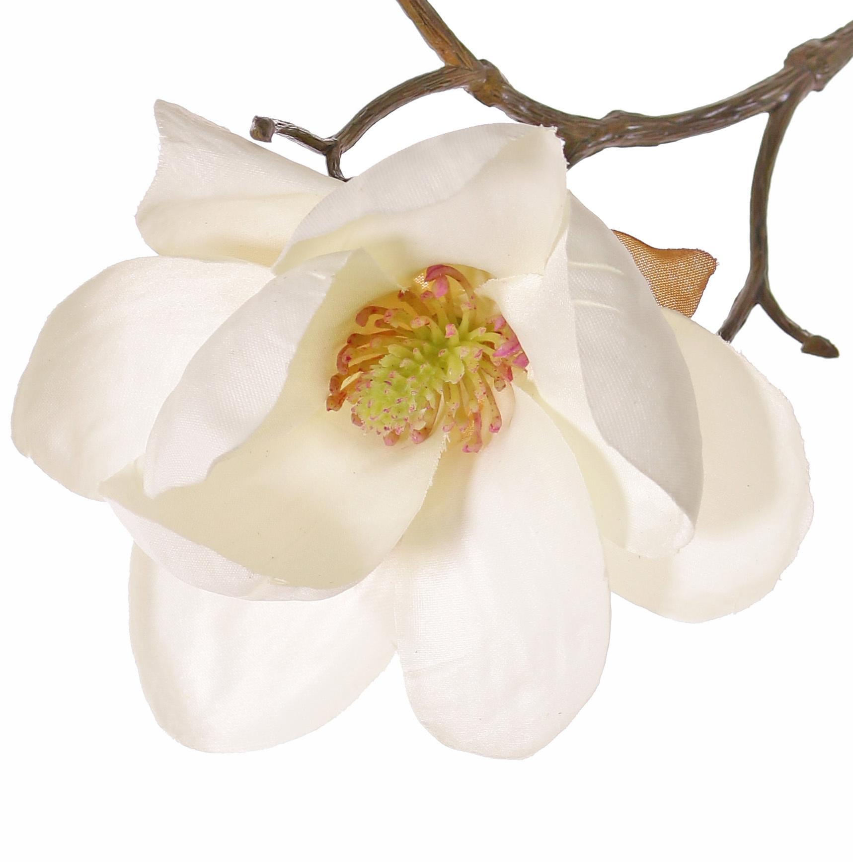 Magnolia, 5 flores (3x Ø 8cm, 2x 5 cm) & 12 capullos, 80 cm