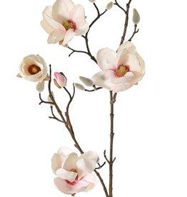 Magnolia (Beverboom) 4 vertakkingen, 5 bloemen (3x Ø 8cm, 2x 5 cm) & 12 knoppen (behaard)