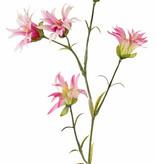 Dianthus (japanisch) mit 5 Blumen und 14 Blättern, 65 cm
