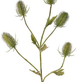Kardeboltak (Dipsacus) 5 vertakkingen, 5 kaardebollen & 5 blad, geheel behaard, 90cm