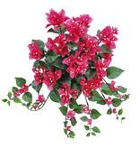 Bougainvillea spectabilis hangplant, 90 flowers, 97 leaves, UV safe, Ø 50 cm