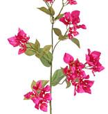 Bougainvillea spectabilis, 9 flower cluster, 22 leaves, 80 cm