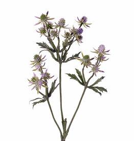 Cardo (Eryngium)