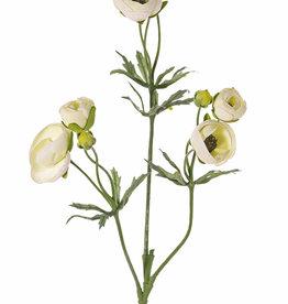 Ranonkel (Ranunculus) met 3 vertakkingen