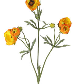 Ranonkel (Ranunculus)