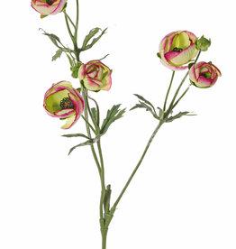 Ranunkel (Ranunculus) 3 Verzweigungen