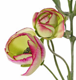 Ranonkel (Ranunculus) met 3 vertakkingen, met 6 bloemen (4x Ø 4,5 cm /2x Ø 3 cm ), 3 knop & 24 blad, 65cm (limerose)