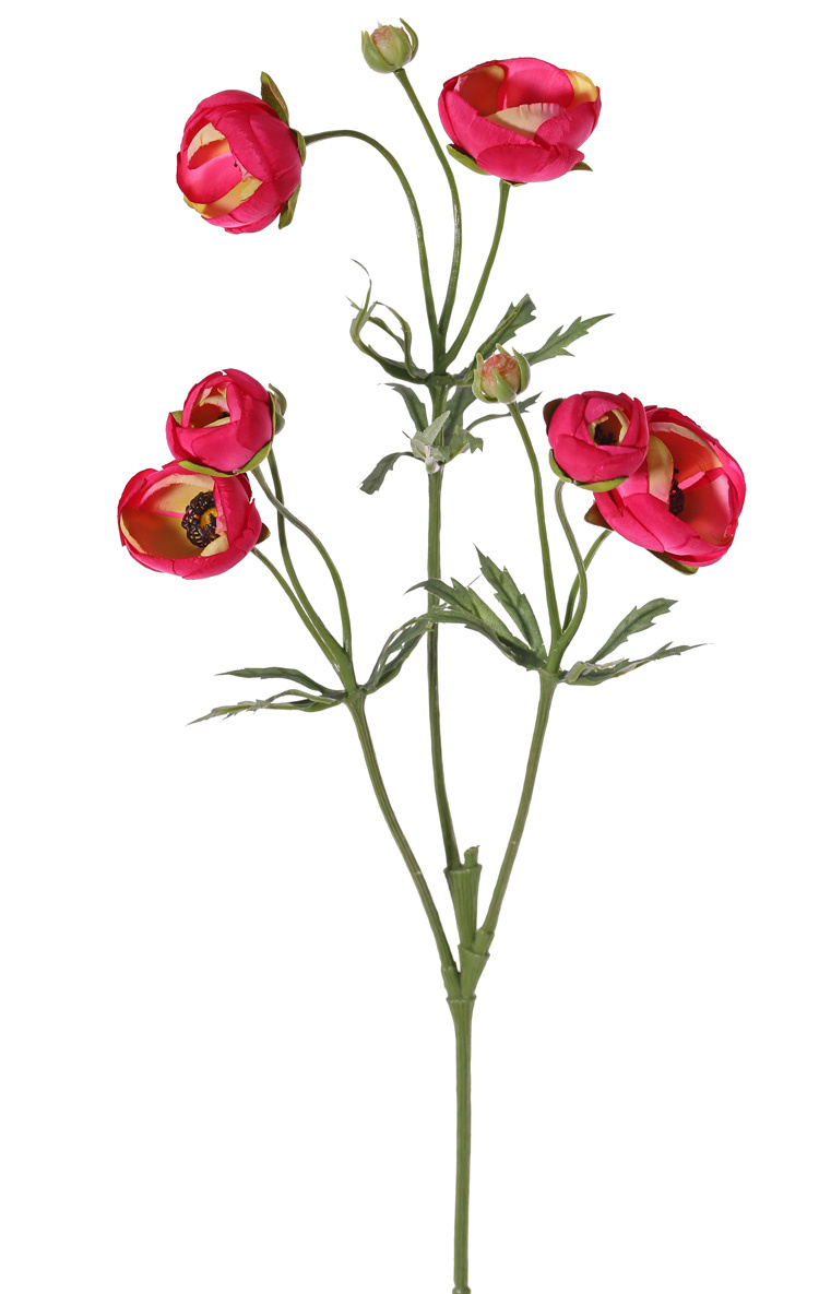 Ranunculo (Ranunculus), 6 flores (4x Ø 4,5 cm / 2x Ø 3 cm ), 3 capullos & 24 hojas, 65 cm