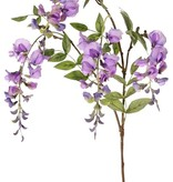 Wisteria (Blauweregen) x3, met 4 bloemen (2L/2M) & 5 bladtoeven, 80cm