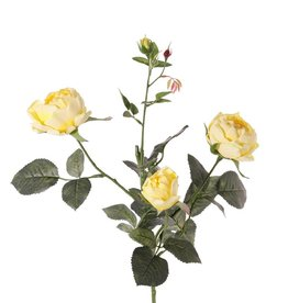 Roos (Rosa) 'Ariana', 4 vertakkingen, met 3 bloemen, 1 bloemknop & 2 knopjes, 31 blad, 73 cm