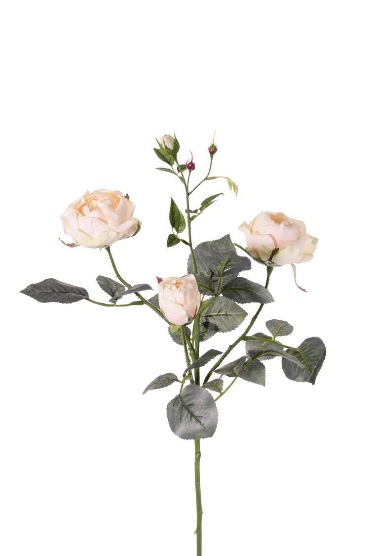 Roos (Rosa) 'Ariana', 4 vertakkingen, met 3 bloemen, 1 bloemknop & 2 knopjes, 31 blad, 73 cm -