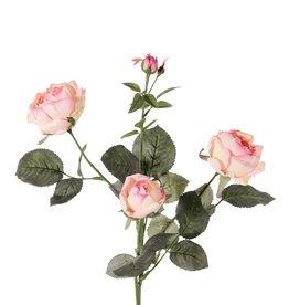 Rose 'Ariana', 4 Verzweigungen, 3 Blumen, 1 Blumenknospe, & 2 kl. Knospen, 31 Blätter, 73 cm