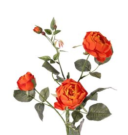 Rosa 'Ariana', 3 flores, 1 capullo de flor, 2 capullos, 31 hojas, 73 cm